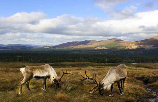 Royal Deeside: Loved by Royalty, Walt Disney, and You…?